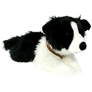 Pies Border Collie Roxi - 62cm